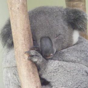 Австралия, Канберра, Сидней, домой