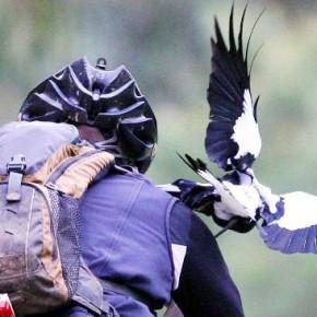 Белая ворона в черном фраке