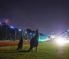 Канберра, Брисбен или Мельбурн? (начало)