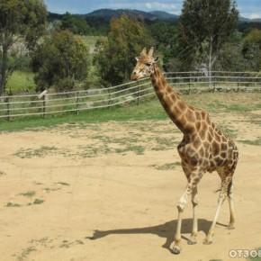 Канберрский зоопарк и аквариум