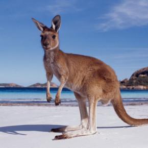 Австралия - лучше место для туристов в 2016 году