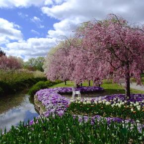 Выходные в саду тюльпанов