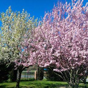 Весна в Кокингтон Грин
