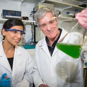 Ученые из АНУ: фотосинтез - путь к доступной энергии
