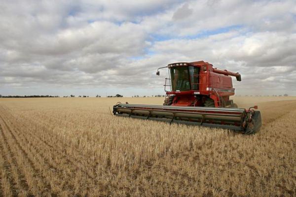 AU wheat