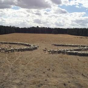 Австралийские фермеры отмечают день Австралии