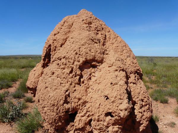 Wtermites