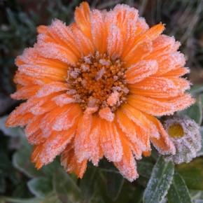 Осенне-зимние цветы