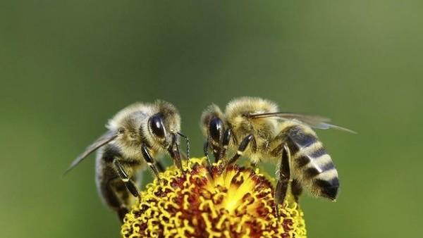Beekeepers 03