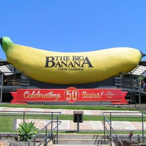 Гиганты вокруг нас. Большой банан.