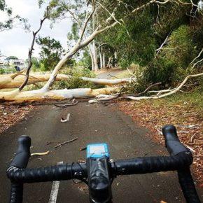 Канберра: шторм повалил деревья и создал хаос по всему городу